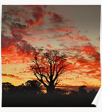 Single Boab Red Clouds Poster