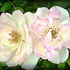 Look alike Beauty - My Garden by EdsMum