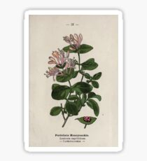 Wayside and woodland blossoms a pocket guide to British wild flowers for the country rambler  by Edward Step 1895 031 Perfoliate Honeysuckle Sticker