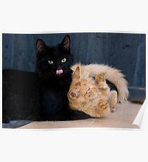 Cats at Play Poster