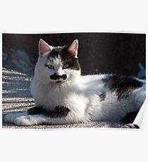 Kitty of Krk Poster