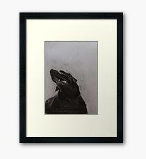 Black and white drawing, Labrador Retriever Framed Print