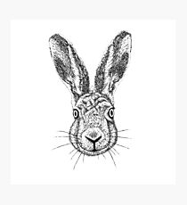 Hare Portrait Ink Drawing Photographic Print