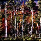 Birches by Wayne King