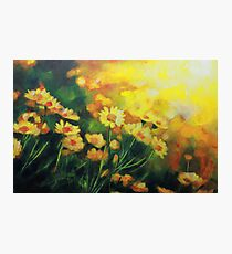 Daisies in the Sun landscape Flower painting by Samuel Durkin Photographic Print