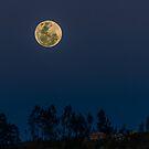 Full Moon Rising by Paul Wolf