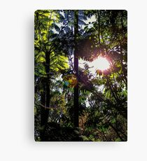 Late afternoon in the forest. Canvas Print
