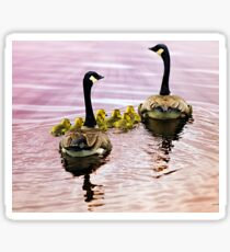 Going Home for the Night (Canada Geese) Sticker