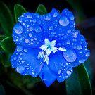 Blue by Keith G. Hawley