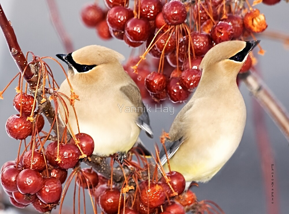 Feathers and Cherries by Yannik Hay