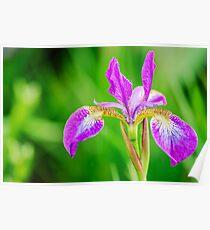Poetic Purple Flower Poster