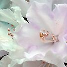 White Beauty 2 by Anivad - Davina Nicholas