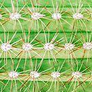 Green Spiky Cactus von MMPhotographyUK