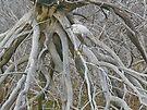 Snowy Egret - Egretta thula - On Marsh Tangle by MotherNature