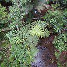 Birds eye view of a rainforest creek  -   Daintree Rainforest  FNQ by john  Lenagan