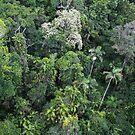 Birds eye view  of the rainforest -   Kuranda FNQ by john  Lenagan
