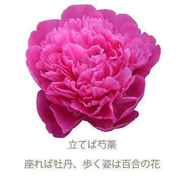 peony by were