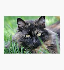 Dusty Tortie Photographic Print