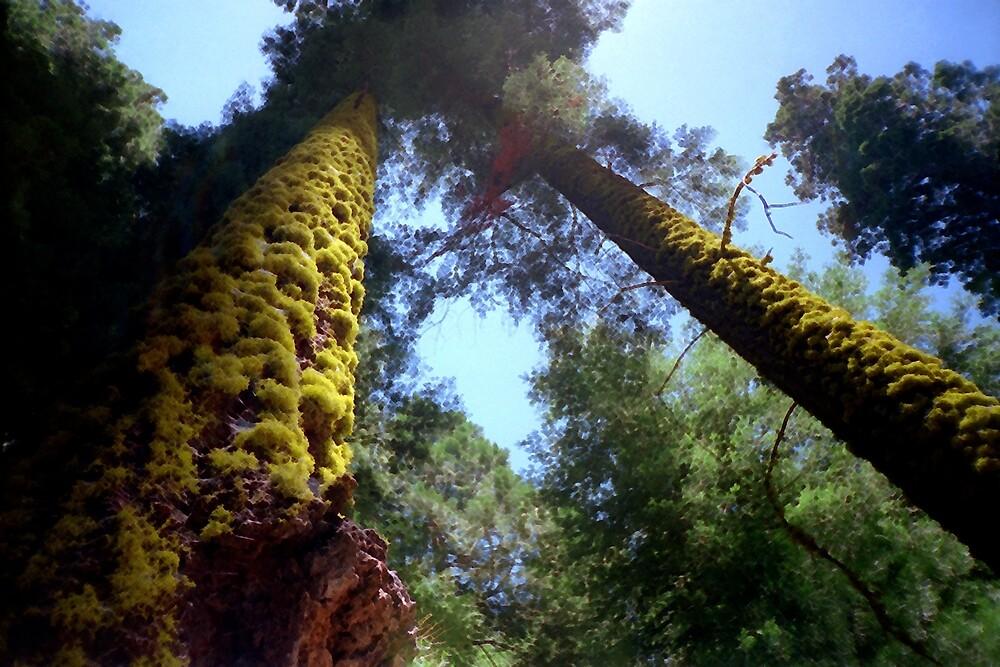Tree Moss by gpuronen