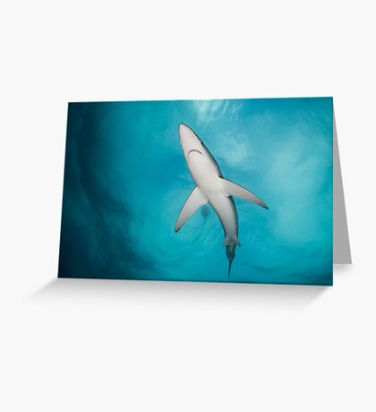 Blue Shark from below, South Africa Greeting Card