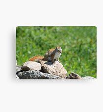Cute little Red Squirrel Canvas Print