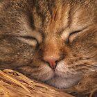 Do Not Disturb! by jean-louis bouzou