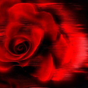 Red Roze by jwalk
