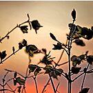 Early Spring Sunset by Herbert Shin