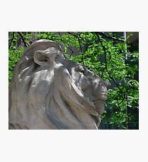 Lion at the Library  Photographic Print