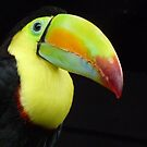 TOUCAN by Marilyn Grimble