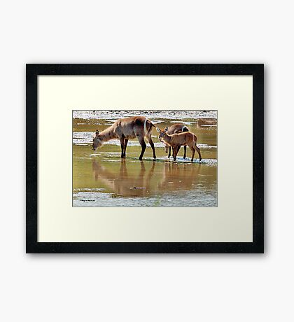 NO PLACE BETTER, THAN IN DIE MIDDLE OF THE RIVER ! Framed Print