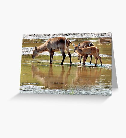 NO PLACE BETTER, THAN IN DIE MIDDLE OF THE RIVER ! Greeting Card