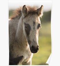 Cute Foal Poster