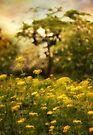 Flower Field by Jessica Jenney
