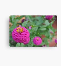 South African Flower Canvas Print