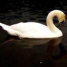 Swan Lake by shelleybabe2
