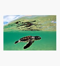 Long-distance swimmer Photographic Print