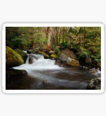 Taggerty Cascades, Marysville, Victoria Sticker