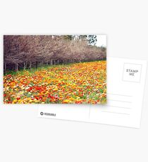 Changing Seasons Postcards