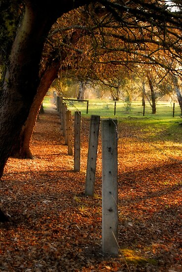 Autumn Day II by Julie Thomas