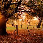 Herbsttag von Julie Thomas