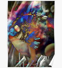 4564 Fish and Anemone Poster
