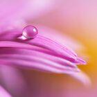Pink Daisy by Veikko  Suikkanen