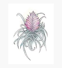 Pink Quill Photographic Print