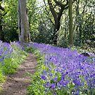 Spring Bluebells by LazloWoodbine