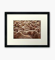 Sheep from Peninsula Valdes Framed Print