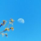 Daytime Moon by FrankieCat
