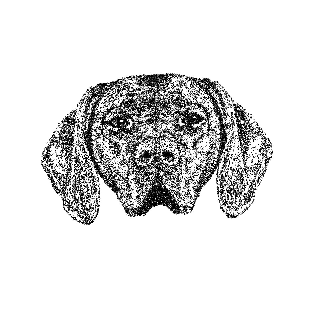 Pointer Dog Ink Drawing by Nigel Tinlin