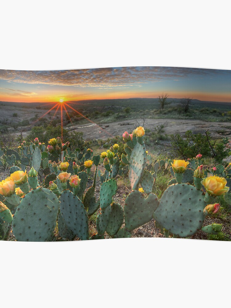 Texas Hill Country Images Prickly Pear Cactus At Sunset 1 Poster