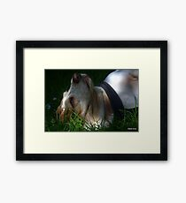 Supine Gracie  Framed Print